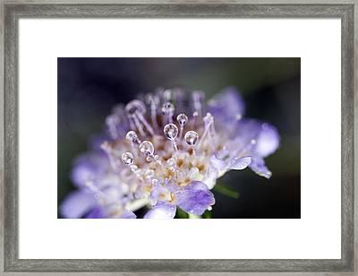 Pincushion Drops Framed Print by Rebecca Cozart