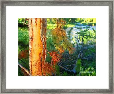 Pine By The River Framed Print by John Kreiter