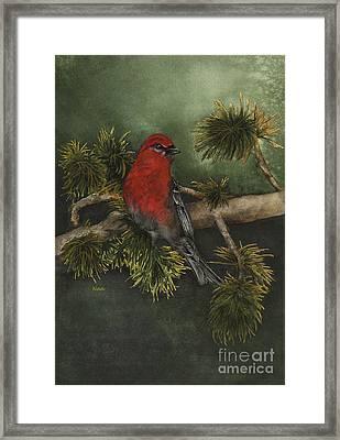 Pine Grosbeak Framed Print by Nan Wright