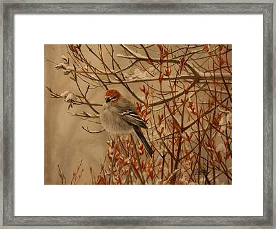 Pine Grosbeak Framed Print by Tammy  Taylor