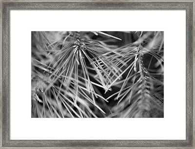 Pine Needle Abstract Framed Print by Susan Stone