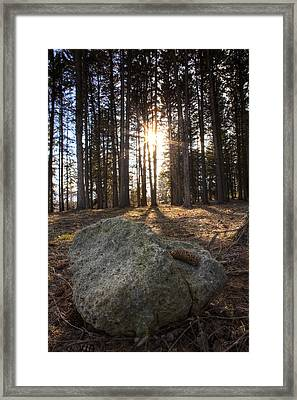 Pine Rock Framed Print by Ed Cilley