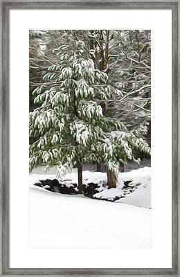 Pine Tree Covered With Snow 2 Framed Print by Lanjee Chee