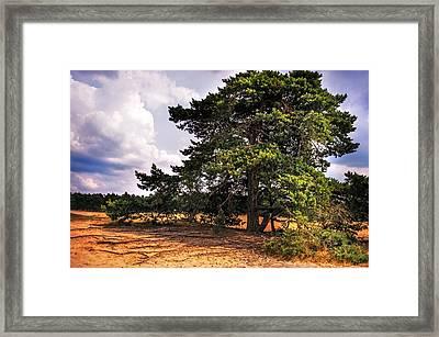 Pine Tree In Hoge Veluwe National Park 1. Netherlands Framed Print by Jenny Rainbow