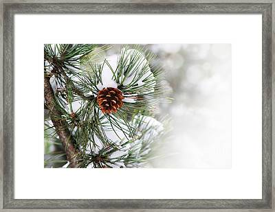 Pine Tree Framed Print by Jelena Jovanovic