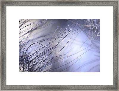 Pine Tree Needles 1 Framed Print by Jenny Rainbow