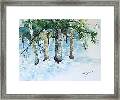 Pine Trees And Snow Framed Print by Joy Nichols