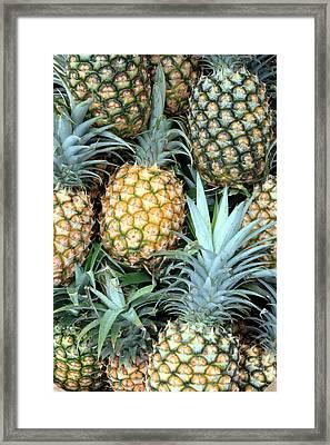Pineapple Paradise Framed Print by Karen Nicholson