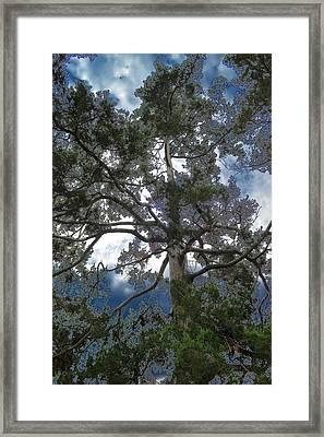 Pining Away Framed Print by Deena Stoddard