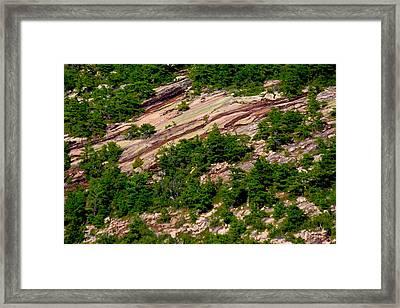 Pink Acadia 8103 Framed Print by Brent L Ander