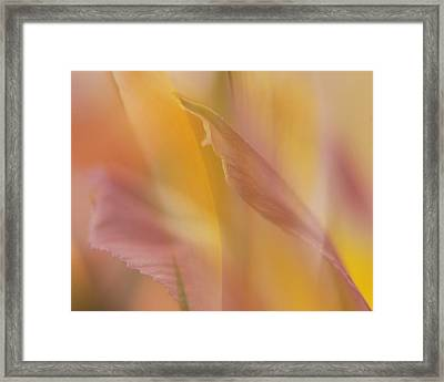 Pink Alstromeria-2 Framed Print by Lyn  Perry