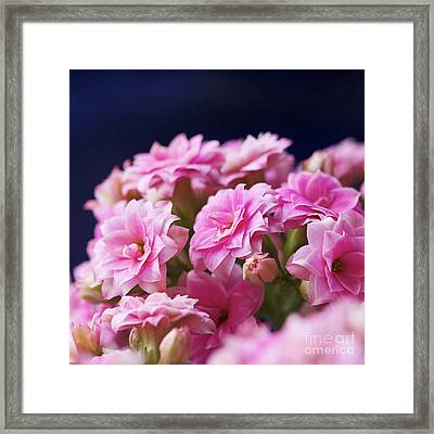 Pink And Blue IIi Framed Print by Pamela Gail Torres