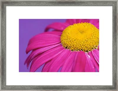 Pink And Purple Smile Framed Print by Lisa Knechtel