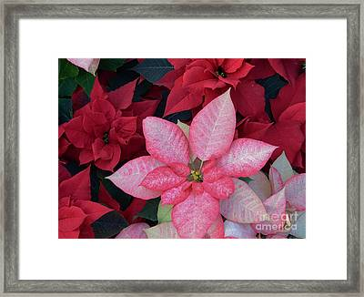 Pink And Red Framed Print by Kathleen Struckle