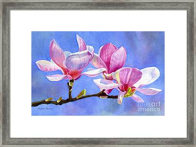 Pink And White Magnolias With Background Framed Print by Sharon Freeman