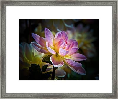 Pink Blossom  Framed Print by Athena Mckinzie