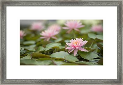 Pink Blossom  Framed Print by Joey  Maganini