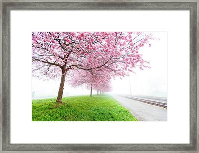 Pink Blossom On Trees Framed Print by Wladimir Bulgar