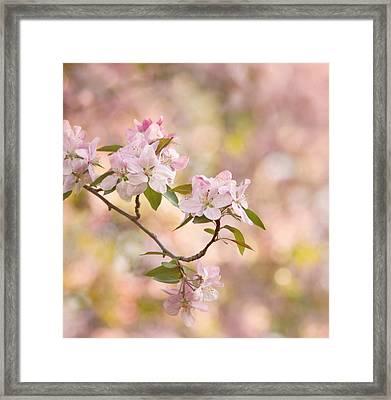 Pink Blossoms Framed Print by Kim Hojnacki