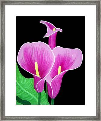 Pink Calla Lillies 2 Framed Print by Angelina Vick