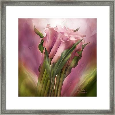 Pink Callas Framed Print by Carol Cavalaris