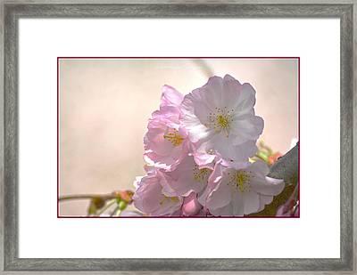 Pink Cherry Petals Framed Print by Sonali Gangane