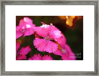 Pink Framed Print by Cheryl Young