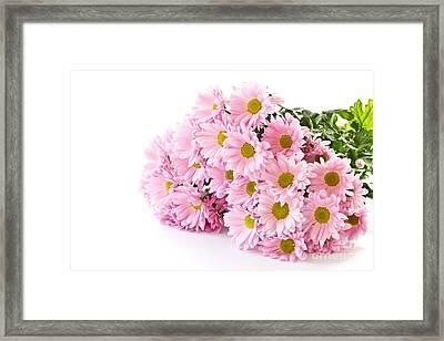 Pink Chrysanthemum Prints Framed Print by Boon Mee