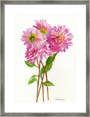 Pink Dahlias Framed Print by Sharon Freeman