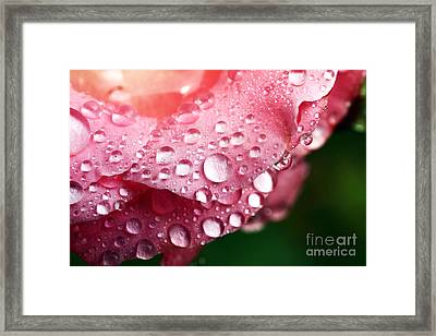 Pink Drops Framed Print by John Rizzuto