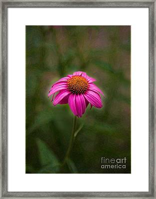 Pink Echinacea Digital Flower Photo.painting Composite Artwork By Omaste Witkowski Framed Print by Omaste Witkowski
