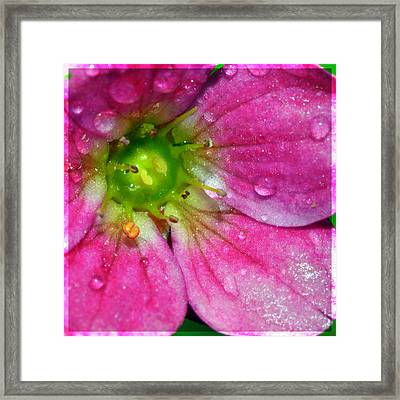 Pink Flower And Water Droplets Framed Print by Toppart Sweden