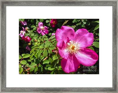 Pink Flower Framed Print by Gregory Dyer