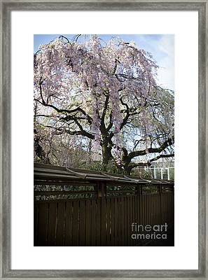 Pink Flowering Tree Framed Print by Thanh Tran