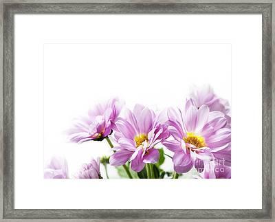 Pink Flowers Framed Print by Jelena Jovanovic