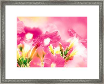 Pink Flowers Framed Print by Panoramic Images