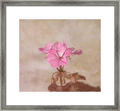 Pink Geranium Flower Framed Print by Kim Hojnacki