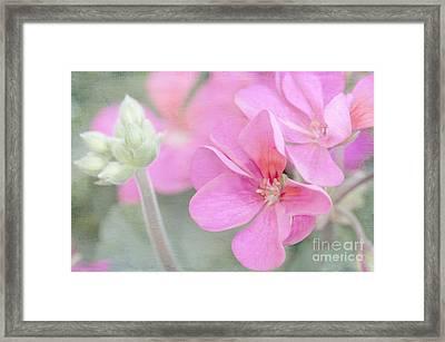 Pink Geraniums Framed Print by Betty LaRue