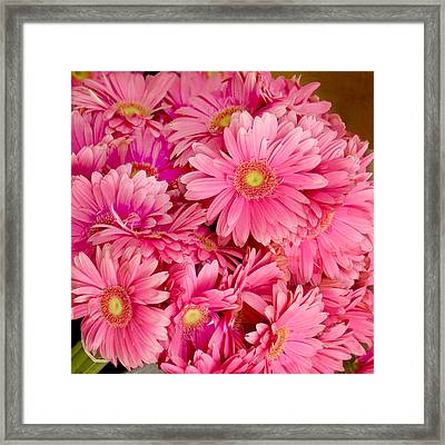 Pink Gerbera Daisies Framed Print by Art Block Collections