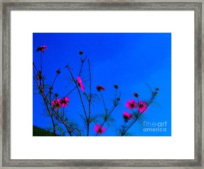 Pink Green And Blue Framed Print by Tina M Wenger