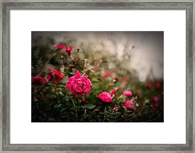 Pink Heaven Framed Print by Linda Unger