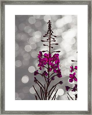 Pink  Framed Print by Heiko Koehrer-Wagner