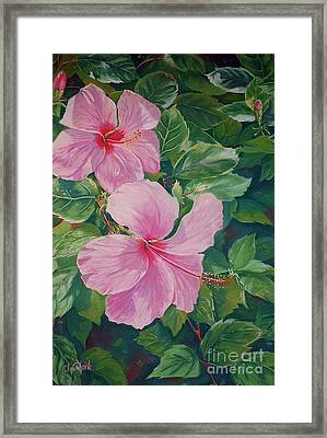 Pink Hibiscus Framed Print by John Clark