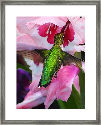 Pink Hummer Framed Print by Bill Caldwell -        ABeautifulSky Photography