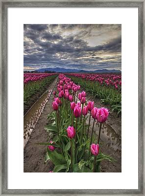 Pink Impression Framed Print by Mark Kiver