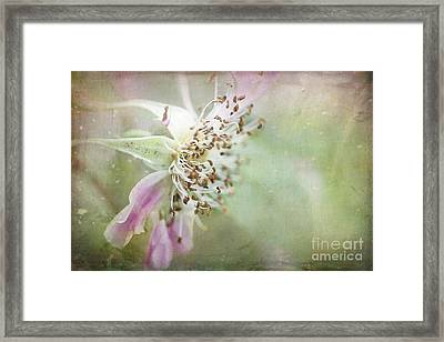 Pink Impression Framed Print by Teresa Zieba