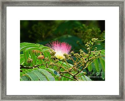 Pink In The Pod Framed Print by Lew Davis