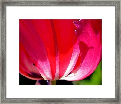 Pink Light Framed Print by Rona Black