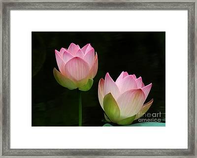 Pink Lotus Duet Framed Print by Sabrina L Ryan