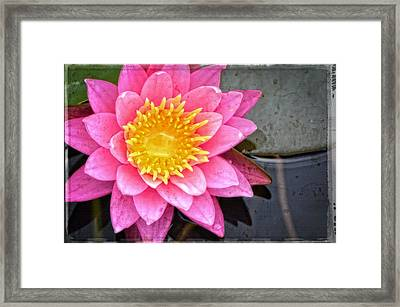 Pink Lotus Flower - Zen Art By Sharon Cummings Framed Print by Sharon Cummings
